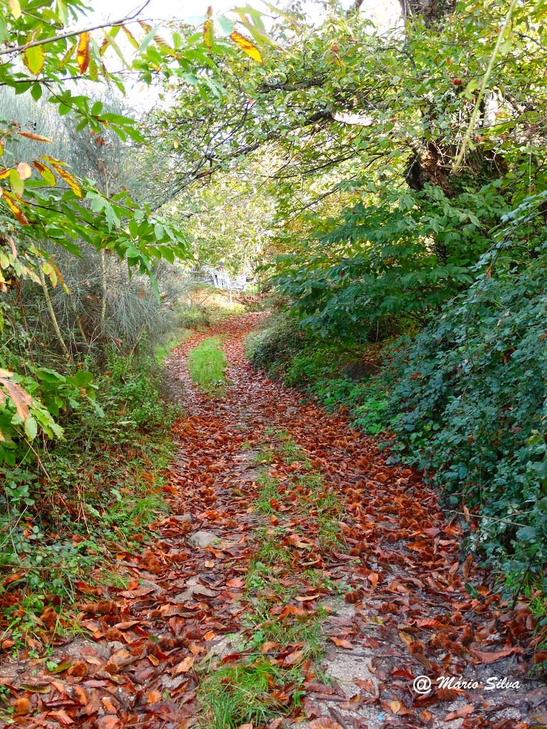 Águas Frias (Chaves) - ... folhas caídas ...