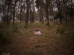 Face Down #1 | Anzoategui-San Tomé (Aaroncillo) Tags: boy portrait selfportrait guy forest photoshop retrato pines bosque proyect rare raro proyecto facedown aaroncillo aaróngil