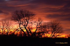January 18, 2014 - Fire in the sky at sunrise as seen from the Rocky Mountain Arsenal. (Ed Dalton)