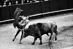 Bullfighting is the only art in which the artist is in danger of death and in which the degree of brilliance in the performance is left to the fighter's honor. Ernest Hemingway (thescourse) Tags: bw canon blood sevilla bn arena bullfight corrida toro biancoenero miura matador torero plazadetoros blackandwithe bravura realmaestranzadecaballera canoniani canonitalia tamron70200f28 canoneos5dmkii eos5dmkii
