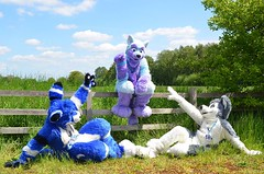 "Reminds me pretty much of the ""Creation of Adam"" by Michelangelo ^^ Avalon Roo and Berion Bagley :3 #FursuitFriday (Keenora Fluffball) Tags: keenora fursuit furry kee"