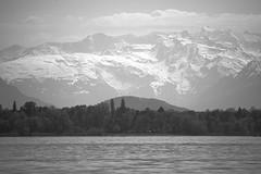 Lake, Forest, Mountain (oliko2) Tags: mountain lake snow water monochrome forest germany landscape blackwhite outdoor lakeconstance rawtherapee nikond7100