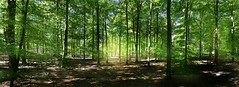 Spring Forest Berlin, Germany (Christian_from_Berlin) Tags: sun forest germany deutschland spring sony sonne wald grunewald frhling wannsee sonyrx100