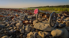 Coastal defense line in Hittarp ... :-) (frankmh) Tags: flower beach rose skne sweden outdoor pebble cannon helsinborg hittarp