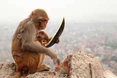 Snack (Mark S Weaver) Tags: kathmandu nepa