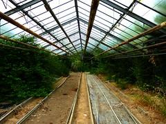Gewchshaus im Hofgarten (zikade) Tags: greenhouse verlassen gewchshaus serre