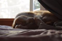 kiss good night (Flalenz) Tags: cat gato asleep