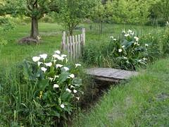 Le petit pont de bois (Daniel Biays) Tags: iris ru portail arums ruisseau petitpontdebois