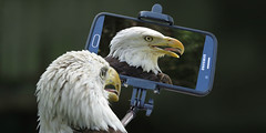 selfie-admiration (Mel's Looking Glass) Tags: bird funny eagle selfie