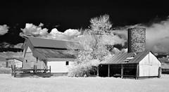 down on the farm V (eDDie_TK) Tags: rural ir colorado farming barns co infrared farms berthoud rurallife ruralliving larimercounty berthoudco whitebarns larimercountyco