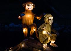 _DSC9551_2 (Elii D.) Tags: light fish flower animal night zoo monkey neon dragons lantern lampion dargon