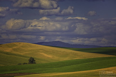 Lines in the hills (Dave Arnold Photo) Tags: park wild sky usa cloud hot sexy ass beautiful sex rural canon naked nude landscape photography spread us photo washington big high fantastic paradise butte tit photographer state outdoor farm wheat awesome arnold pussy scenic picture peaceful pic farmland hills wash photograph american empire huge pacificnorthwest wife upskirt wa serene rays southeast agriculture eastern iconic pnw milf idyllic palouse palouseriver 1635mm steptoe franklincounty davearnold oakesdale palouseregion 5dmkiii davearnoldphotocom