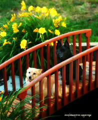 IMG_9870 (skyisthelimitdj) Tags: bridge flowers color cute dogs grass animal canon puppy photo mutt furry puppies hound schipperke doggy pup