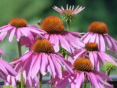gruppo (giorgio 12) Tags: fiori colori viola bottoni