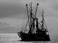 Krabbenkutter vor Spieka-Neufeld (cuxclipper ) Tags: shrimper krabbenkutter fischerei fishing boot boat schiff ship barcodepesca blackwhite schwarzweiss chrome spiekaneufeld cuxland niedersachsen