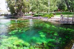 Giant Springs (Xuberant Noodle) Tags: plant water america garden giant spring montana paradise native springs vegetation eden