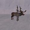 Flying Reindeer-dve
