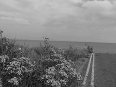 The road end Aldbrough. (6m views. Please follow my work.) Tags: sea blackandwhite sex blackwhite google nikon flickr yorkshire northsea eastcoast flickrcom eastyorkshire googleimages coastalerosion mamf seasideroad aldbrough seasideroadaldbrough mamfphotography