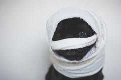 Pugoween - Mummy (itsapugblog) Tags: dog halloween pug howloween pugoween