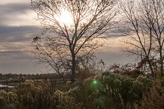 20141104-IMGP1910 (STC4blues) Tags: red jerseycity flare libertystatepark urbanpastoral