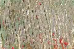 Texturas & Textures / Madera (leon_calquin51) Tags: chile wallpaper art texture textura painting sketch flickr pattern arte photos background patterns web details fineart free textures leon fotos backgrounds catalog wallpapers draw dibujos dibujo diseo fondo detalles texturas draws cultura pintura catalogo ilustracion grafico fondos portafolio croquis vichuquen calquin wallspeaktous huie textureart losmurosnoshablan quincal