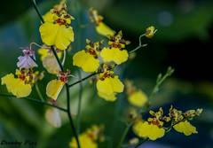 Maui - Flowers (Dunby PICS) Tags: flowers hawaii maui lahaina