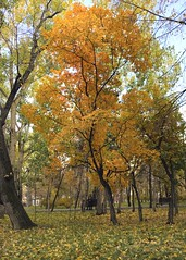Autumn tree - again (monorail_kz) Tags: park autumn red orange fall yellow bench nokia october kazakhstan 1020 almaty 2014 reedit lumia