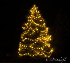 Chrismastree (*_geknippst_*) Tags: tree weihnachten saxony sachsen weihnachtsbaum baum chrismas chrismastree lugau