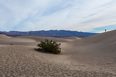 Death Valley Trip - Nov 2014 - 245 (www.bazpics.com) Tags: california park ca trip november winter usa tree america point death us sand unitedstates desert joshua weekend dunes saturday visit national mesquite crater valley deathvalley zabriskie ubehebe 2014 theraceway barryoneilphotography