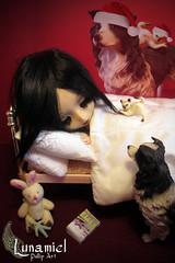 21 Dcembre. (SailorLun@) Tags: christmas navidad doll pullip nol pullipala