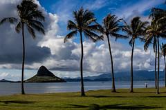 View on Mokoli'i from Kualoa Regional Park (Tim&Elisa) Tags: ocean sky beach water clouds canon landscape island hawaii pacific oahu shore palmtree aloha chinamanshat kualoaregionalpark mokoli