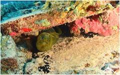 January 15, 2015 01:14 PM (Ocean Explorers St. Maarten) Tags: borderfx