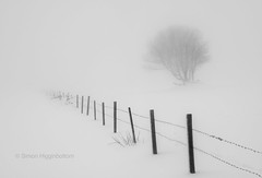 Standing alone, West Yorkshire (www.simonhigginbottom.co.uk) Tags: uk winter england mist snow cold west tree simon fog fence landscape mono nikon yorkshire january minimalism halifax minimalist d800 calderdale higginbottom