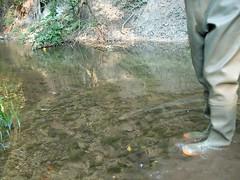 IM001097 (hymerwaders) Tags: wet yellow mud gelb muddy schlamm matsch nass chestwaders watstiefel watsteifel
