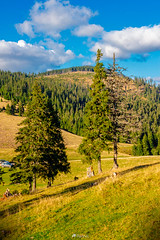 coniferous forest on a mountain slope-151003 (1) (M. Pellinni) Tags: wood travel blue wild summer sky panorama cloud mountain tree green tourism nature beautiful grass pine forest landscape woods europe view outdoor hiking top background hill meadow scene valley fir spruce slope dropbox coniferous ifttt