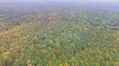 Flying Over The Forest (denyshrishyn) Tags: park wood autumn red orange plant color tree fall nature beautiful leaves yellow forest season landscape leaf colorful branch top scenic aerial foliage