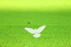Pentecost (Wackelaugen) Tags: green bird nature canon photography eos photo god spirit faith jesus gras whitsunday googlies pentecost holyspirit whitsuntide whitsun wackelaugen