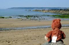 beachday (akaceweha) Tags: england beach water strand coast wasser cornwall teddy br kste