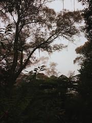 Rainy day in the Mountains (Markus Jaaske) Tags: australia bluemountains leura nokia808pureview