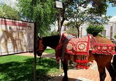 Ruta del Tempranillo-Alameda.(Mlaga) (lameato feliz) Tags: caballo andaluca alameda bandoleros rutadeltempranillo