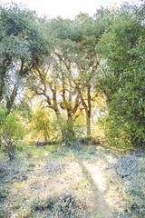 (Melissa Emmons Photography) Tags: california flowers trees flower castle nature sunshine canon landscape spring sandiego hiking c explore lensflare canon5d warnersprings neverstopexploring