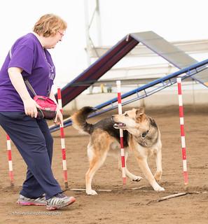 DOGSmart Training Agility Fun Match 2016-22