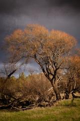 Autumn tree (dave.fergy) Tags: autumn newzealand plants storm tree texture weather composite landscape countryside nz wellington nik florafauna adobeps ponatahi on1pics