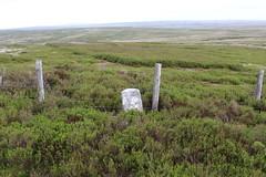 milestone (kokoschka's doll) Tags: milestone heather moorland fence allendale pennines