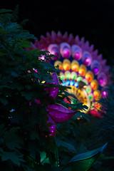 _DSC9496_2 (Elii D.) Tags: light fish flower animal night zoo monkey neon dragons lantern lampion dargon