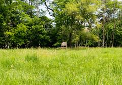 Druids (BradPerkins) Tags: abandoned strange field grass chair odd prairie discarded urbanlandscape tallchair chairinafield