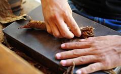 DSA_3007 (Dirk Rosseel) Tags: cuba tobacco rolling sigar pinardelrio viales