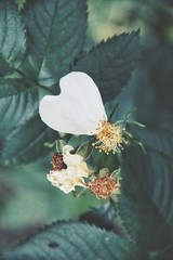 finding hearts (***toile filante***) Tags: flowers flower macro nature leaf poetry dof heart bokeh details natur blumen poetic imagination blume makro blatt leafs emotions bltter herz poesie gefhl poetisch