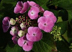 Flower (Hugo von Schreck) Tags: flower macro outdoor blume makro blte yourbestoftoday onlythebestofnature tamron28300mmf3563divcpzda010 canoneos5dsr hugovonschreck
