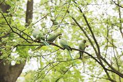 IMG_4522 (Irina Souiki) Tags: parcdesceaux france paris sceaux flowers nature parc park